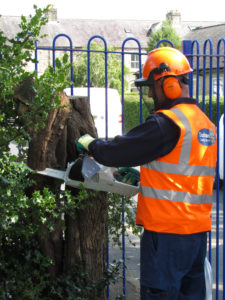 Man chopping down tree