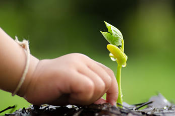 Young child's hand and green shoot plant